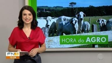 Mau desenvolvimento da amora impacta na produção de casulos do bicho-da-seda - Veja o que é destaque no noticiário rural do Oeste Paulista.