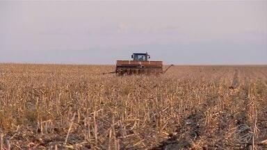 Chuva no sul do estado ajuda a começar o plantio de soja - Chuva no sul do estado ajuda a começar o plantio de soja