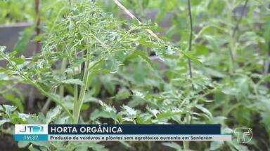 Produção de Horta Orgânica tem crescimento na região - Muita gente produzido para o próprio consumo. Alimentos têm menores teores de agrotóxicos.