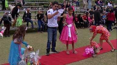15° Festcão diverte pets e seus donos em Mogi das Cruzes - Público levou animais para participarem do evento que está em sua 15ª edição.
