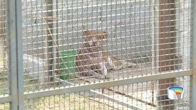 Idoso morre após ser atacado por pitbull em Piracaia - Dono do cachorro foi detido e vai responder por homicídio doloso.