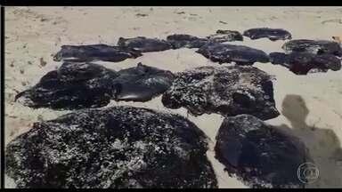 Manchas de óleo chegam à Praia de Candeias, em Jaboatão dos Guararapes, no Grande Recife - Os fragmentos de óleo encontrados são pequenos e o trabalho de limpeza é difícil. Já passa de 230 o número de localidades afetadas. Na Bahia, pesquisadores encontram resíduos dentro de peixes e mariscos.
