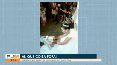 Cãozinho vira pajem de casamento em Cabo Frio - Tito foi adotada em 2018 após ser abandonado na rua.