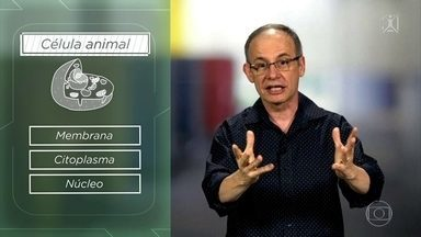 Projeto Educação: entenda as diferenças entre as células animais e vegetais - Professor Fernando Beltrão alerta que esse é um tema frequente no Enem.