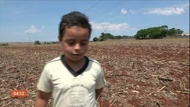 Menino grava vídeo para agradecer pela chuva nas plantações no PR - Conheça a história de Leonardo, filho de agricultores do Paraná.