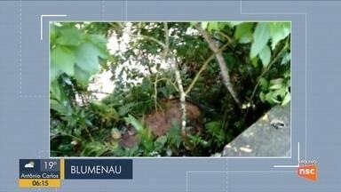 Giro de notícias: Casal acusado de homicídio do filho deve ir a júri popular em Blumenau - Giro de notícias: Casal acusado de homicídio do filho deve ir a júri popular em Blumenau