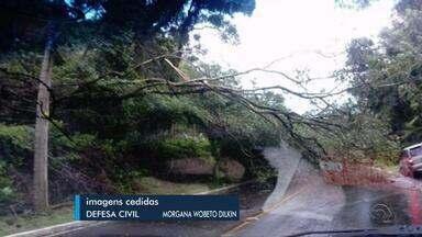 Defesa Civil monitora níveis dos rios do RS após alto índice de chuva - Rajadas de vento danificaram casas e causaram a queda de árvores no estado.