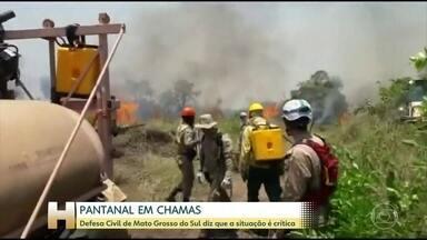 Defesa Civil de Mato Grosso do Sul diz que a situação no Pantanal é crítica - O Pantanal está em chamas. O vento vem espalhando rapidamente o fogo pela vegetação seca. O calor de quase 40 graus dificulta o trabalho dos bombeiros.