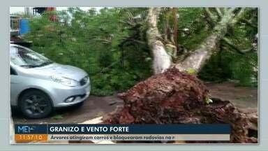Chuva e vento forte assustam moradores da região Oeste - Árvores atingiram carros e bloquearam rodovias na região de Cascavel.