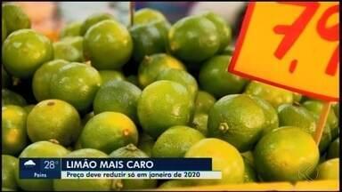 Limão Thaiti fica mais caro em cidades do Centro-Oeste de Minas Gerais - Explicação do aumento de quase 200% no preço pode estar nos campos: chuvas atrasadas e pragas nas plantações. Expectativa é que valor melhore no próximo ano.