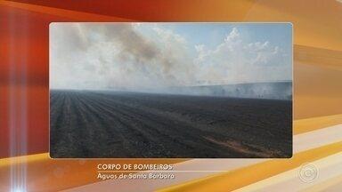 Incêndio atinge canavial e área de preservação ambiental em Águas de Santa Bárbara - Segundo os bombeiros, o fogo atingiu cerca de 700 hectares de um canavial e 100 hectares do Horto Florestal.