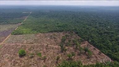 Amazônia: desmatamento sobe 80% em setembro comparado ao mesmo mês de 2018 - Números divulgados pela ONG Imazon apontam que, em setembro, quase dobrou a área de floresta derrubada em comparação ao mesmo mês de 2018.