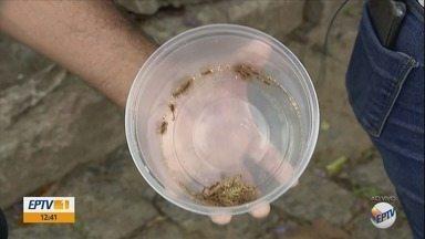 Moradores saem à caça de escorpiões em Campo Belo (MG) - Moradores saem à caça de escorpiões em Campo Belo (MG)