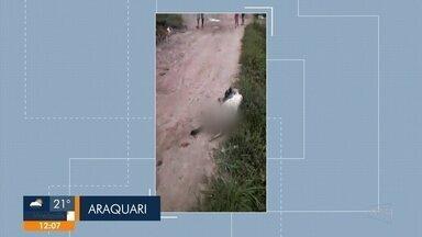 Morre cachorro que levou tiro de policiais em Araquari - Morre cachorro que levou tiro de policiais em Araquari