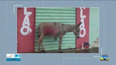 Número de animais abandonados nas ruas cresce no Maranhão - Por consequência, também aumentaram os casos de maus tratos contra os animais.