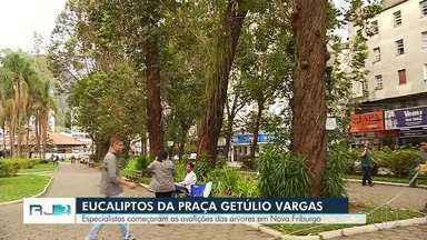 Começa o trabalho de avaliação e identificação dos enormes e centenários eucaliptos - Ação foi na Praça Getúlio Vargas, em Nova Friburgo.