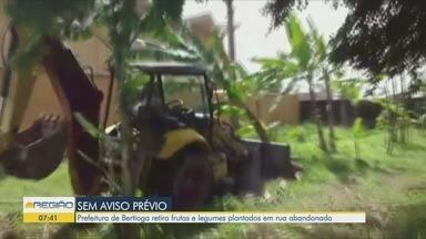 Horta comunitária é destruída e revolta moradores em Bertioga - Com autorização da prefeitura, trator passou por cima das verduras e legumes cultivados.