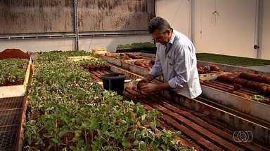 Conheça a história do cultivo da soja em Goiás - Confira a evolução na pesquisa, produtividade e sustentabilidade do cultivo da planta.