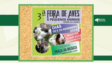 Agenda rural: Confira os eventos que acontecem na Bahia - Entre os destaques ,está a 'III Feira de Aves e Pequenos Animais de Morro do Chapéu'.