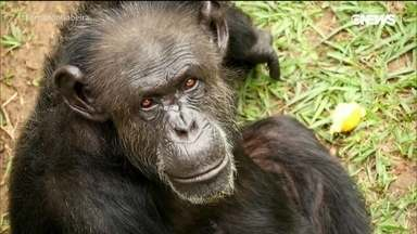 Santuário dos Primatas