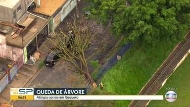 Árvore cai em cima de dois carros na Zona Leste - Rua da Saíra está bloqueada, em Itaquera