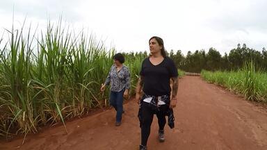 Agricultoras desenvolvem o agronegócio com qualificação - Conheça a história das irmãs Ribeiro que tocam sozinhas uma grande propriedade de grãos, cana-de-açúcar e gado de corte
