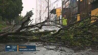 Prefeitura inicia remoção de árvores que caíram após temporal em Campinas - Chuva causou queda de pelo menos 35 árvores.