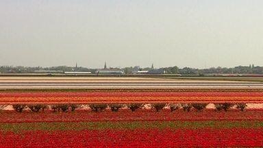 """Série Holanda: vamos visitar o maior jardim do mundo com 7 milhões de flores - Na primeira reportagem da série """"Holanda: terra, água e ar"""" vamos fazer um passeio pelas belezas desse país cheio de histórias, com uma natureza da tirar o fôlego."""