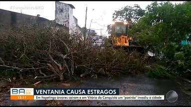 Ventania provoca estragos nas cidades de Itapetinga e Vitória da Conquista, no sudoeste - Árvores caíram e uma onda de poeira tomou conta das cidades.