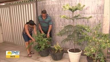 Notificações de casos de dengue mais que dobram em Pernambuco - Há aumento também dos casos de zika e chikungunya