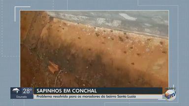 Problema com sapos é resolvido em Conchal - Os anfíbios foram embora, segundo os moradores do bairro Santa Luzia.