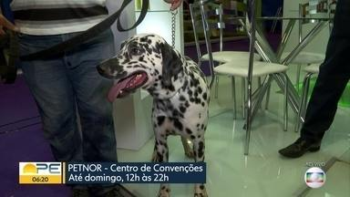 Feira reúne oportunidades e novidades no mercado 'pet' - Petnor acontece no Centro de Convenções de Pernambuco, em Olinda.