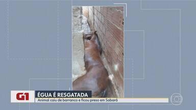 G1 no BDMG: Égua cai e fica presa entre barranco e parede em Sabará, na Grande BH - Dono do animal não foi identificado pelo Corpo de Bombeiros. Depois de resgatado, o bicho foi solto e se juntou aos cavalos que pastavam.