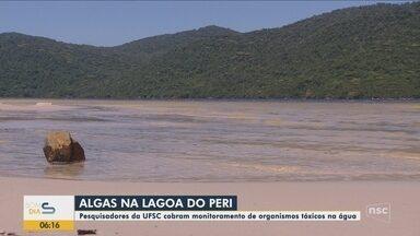 Pesquisadores da UFSC cobram monitoramento de algas na Lagoa do Peri em Florianópolis - Pesquisadores da UFSC cobram monitoramento de algas na Lagoa do Peri em Florianópolis