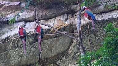 Região da Serra do Roncador abriga uma enorme variedade de animais - Araras, onças, tatus, macacos, peixes e muitos tipos de pássaros... Cientistas monitoram e investigam a vida animal no Parque Estadual da Serra Azul.