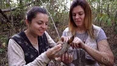 Biólogos estudam impacto das queimadas nas aves da Serra do Roncador - Mato Grosso foi o estado que mais sofreu com as queimadas neste ano. O cerrado tem mais de 6 mil espécies de árvores e plantas e quase 900 espécies de aves, mas a pergunta é: até quando?
