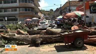 Prefeitura inicia trabalho de poda e retirada de cinco árvores no Centro de Maceió - Na noite de terça-feira, uma árvore caiu em cima de veículos na Rua das Árvores.