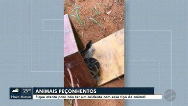 Cuidados com animais peçonhentos - Fique atento para não sofrer um acidente com esse tipo de animal
