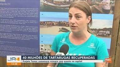Projeto Tamar celebra 40 milhões de tartarugas recuperadas em evento na capital - Projeto Tamar celebra 40 milhões de tartarugas recuperadas em evento na capital