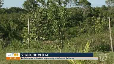 Projeto pretende reflorestar áreas degradadas de Belterra, no PA - Viveiro começou a ser construído em 2017.