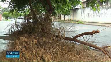 Londrinenses reclamam de galhos caídos espalhados pela cidade - Galhos caíram em uma chuva em novembro e ainda não foram recolhidos