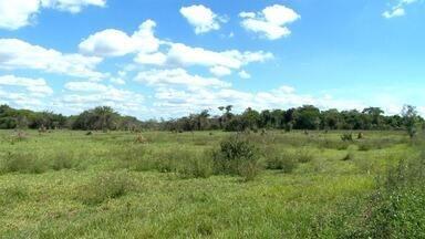 Reserva ambiental começa a se recuperar de incêndio em Presidente Epitácio - Área é conhecida como Lagoa São Paulo.