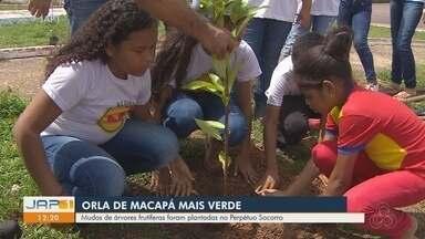 Mudas de árvores frutíferas são plantadas na orla do bairro Perpétuo Socorro, em Macapá - Mudas de árvores frutíferas são plantadas na orla do bairro Perpétuo Socorro