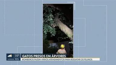 Resgate de gatos é rotina para bombeiros do DF - No dia 30 de dezembro, um gato ficou preso no topo do abacateiro de uma casa em Sobradinho. Os Bombeiros foram ao local e estenderam uma coberta para induzir o gato a pular.