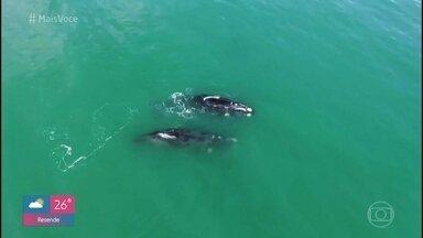 Jimmy e Nakamura visitam Imbituba, berçário das baleias-franca - O 'Na Estrada' vai a Santa Catarina e também conhece a famosa Pedra do Frade, em Laguna