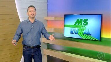 MS Rural - edição de domingo, 05/01/2020 - MS Rural - edição de domingo, 05/01/2020