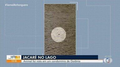Jacaré é visto em um condomínio de Goiânia - Moradores estão assustados.