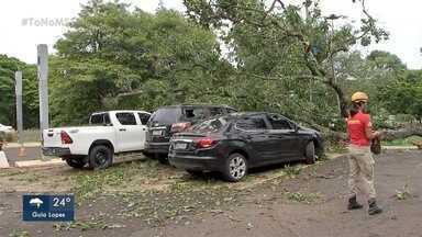 Chuva derruba árvore e galhos atingem carros oficiais do governo no Parque dos Poderes - Previsão é de pancadas de chuva ao longo do dia e as temperaturas não sobem.