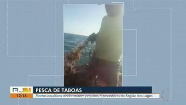 Plantas aquáticas ainda causam prejuízos à pescadores da Região dos Lagos - Vídeos que viralizou nas redes sociais mostra ainda há taboas vidas do fundo do mar para a região.