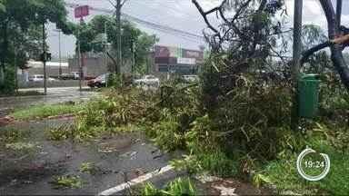 Chuva derruba árvores em São José - Confira a reportagem.